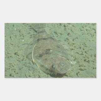 Dover sular fisken rektangulärt klistermärke