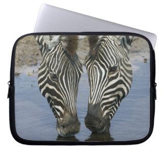Dricksvatten för två zebror (Equusquagga), Laptopskydd