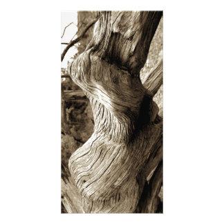 Driftwood 1 fotokort