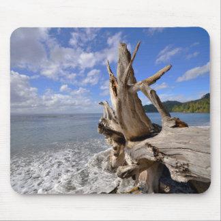 Driftwood på shorelinen av den franska stranden musmatta
