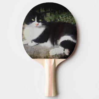Drottningen av den trädgårds- kattpingen Pong Pingisracket