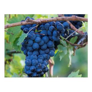 druva och vingård vykort