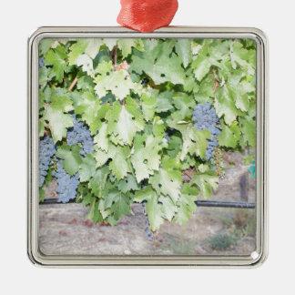 Druvavinenaturen och vinälskare fotograferar silverfärgad fyrkantigt julgransprydnad