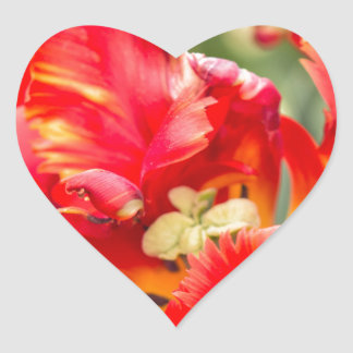 Dubbel ryschig tulpan hjärtformat klistermärke