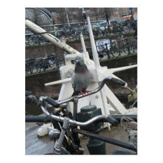 Duva på en cykelvykort vykort