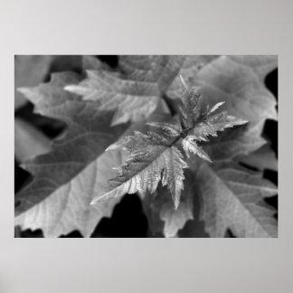 Dyka upp löv poster