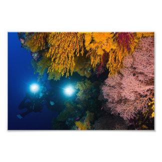 Dykare och mjuka koraller på den underbara fototryck