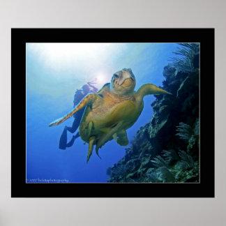 Dykare och sköldpadda i Belize Poster