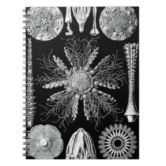 Echinidea anteckningsbok