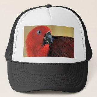 Eclectus papegoja keps