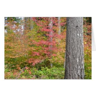 Ed Sutton - nedgångträd Hälsningskort