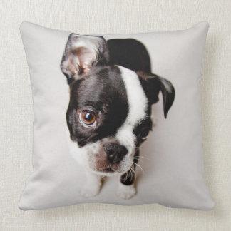 Edison Boston Terrierpuppy. Prydnadskudde