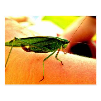 Eeek!  Det finns en gräshoppa på min arm! Vykort