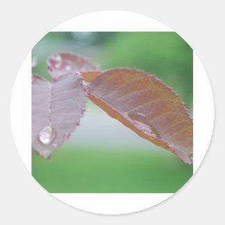 efter regna runt klistermärke