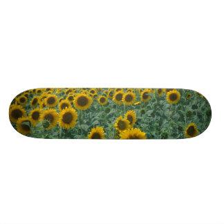 EG frankrike, Provence, solrosfält Skateboard Bräda 21,5 Cm