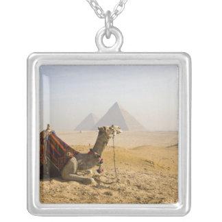 Egypten Cairo. En lone kamel stirrar över Silverpläterat Halsband
