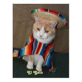 El Gato Bubba Vykort