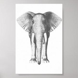 Elefant i svartvitt posters