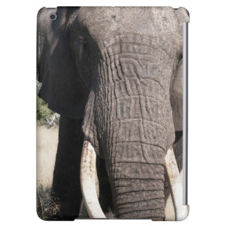 Elefant (Loxodontaafricana), Abu läger 3