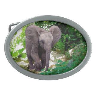 Elefant och djungel