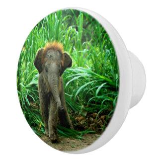 Elefant och gräs knopp