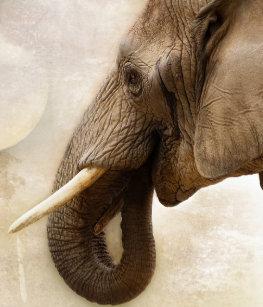 Elefanter Sjalar  8e2e8b29d3c4a