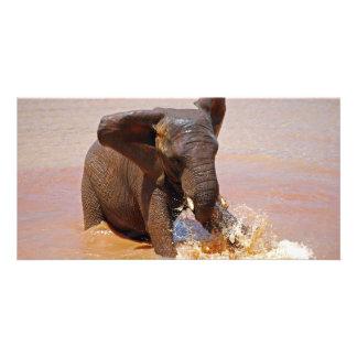 Elefant som leker med vatten fotokort