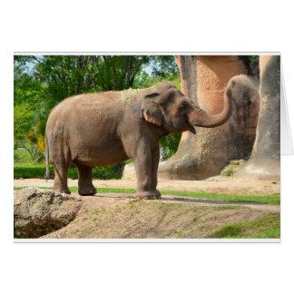 Elefant som tar ett damma avbad hälsningskort