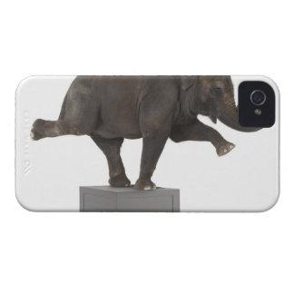 Elefanten som utför trick boxas på iPhone 4 Case-Mate fodraler
