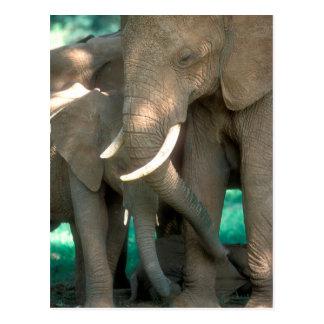 Elefanter som skyddar barn vykort