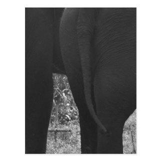 elefanter vykort