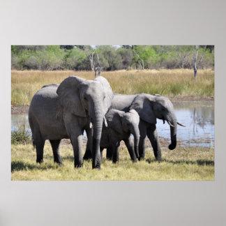 Elefantfamilj Poster