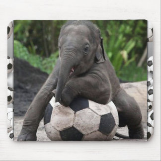 Elefantfotboll Musmatta