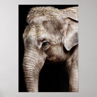 Elefantfotoet avbildar poster