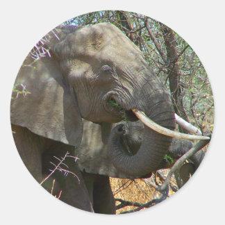 Elefantklistermärkear Runt Klistermärke