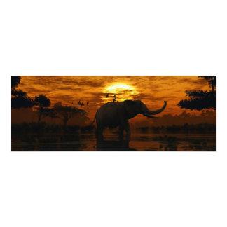 Elefantsolnedgång Fotografiska Tryck