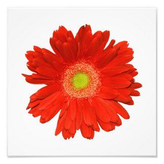 Elegantt fototryck för orange daisy