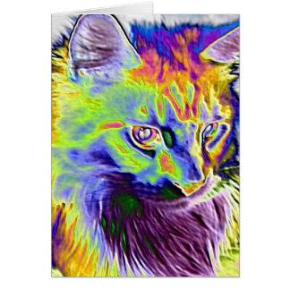 Elektrisk katt OBS kort