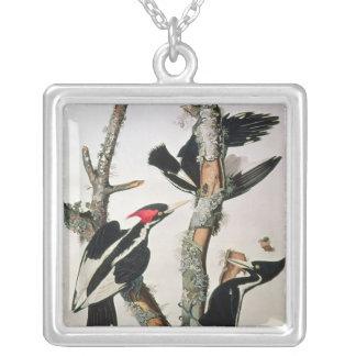 Elfenben-fakturerad hackspett, från 'fåglar av Ame Silverpläterat Halsband