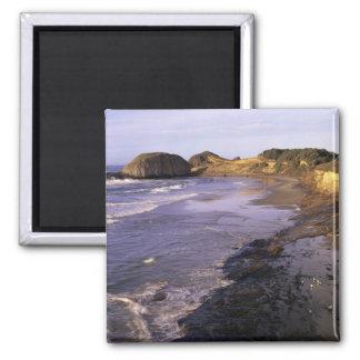 ELLER Oregon kusten, Newport, shoreline på Seal Magnet