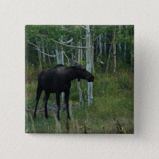 en alaskabo älg går omkring i en asp- skog standard kanpp fyrkantig 5.1 cm