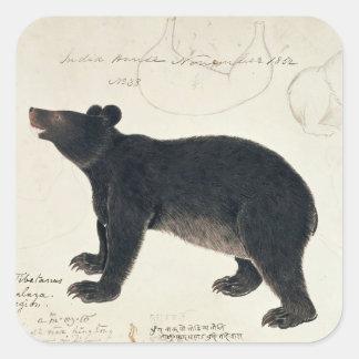 "En asiatisk svart björn, ""Ursus Tibetanus "", Fyrkantigt Klistermärke"