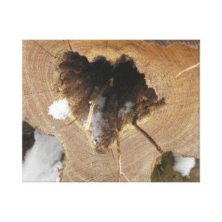 En bild av ett stupat träd med ett hål i mittet
