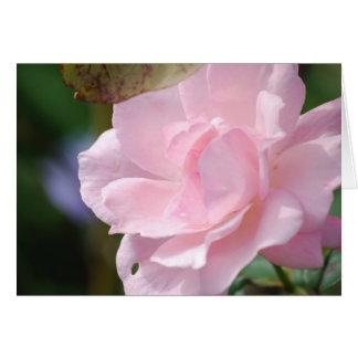 En blek - rosa ros hälsningskort