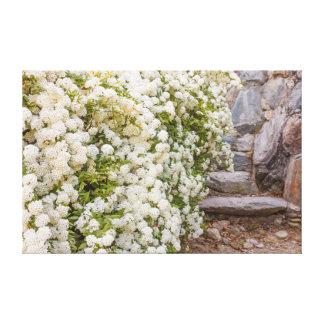 en buske av vitspirea blommar på slågen in kanfas canvastryck