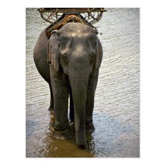 En elefant i norden, Thailand Vykort