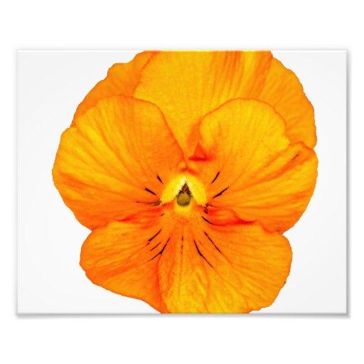 En enkel orange Pansy Fotokonst