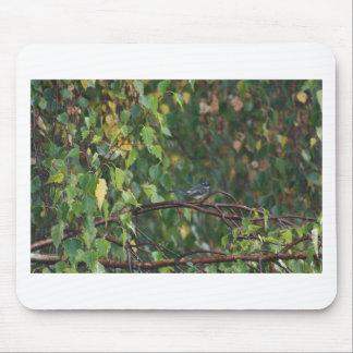 en fågel i busken musmatta