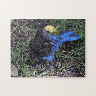 En fågel öga beskådar av en Stellers Jay på Pussel