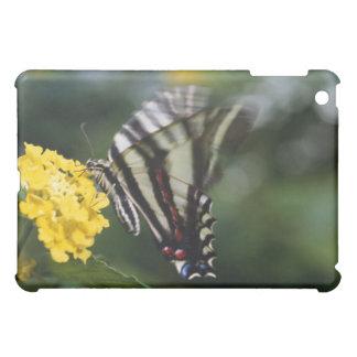 En fjäril, i familjen av Swallowtails eller iPad Mini Mobil Skal